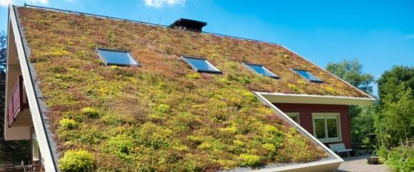 groen dak voordelen