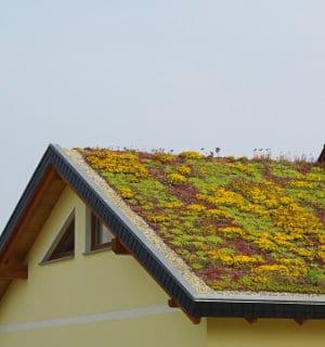 groendak op hellend dak