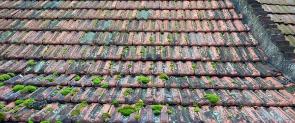 mos-op-dak-verwijderen