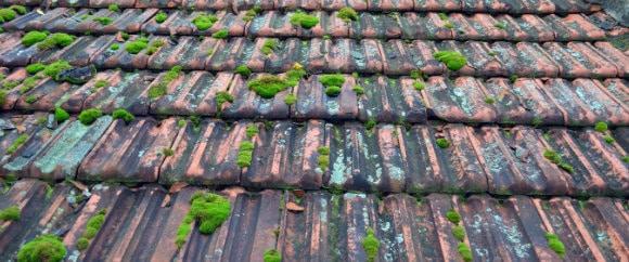 ontmossen van daken kosten